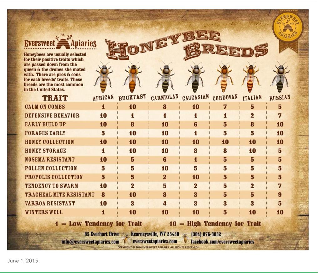 52837-bee2bbreeds