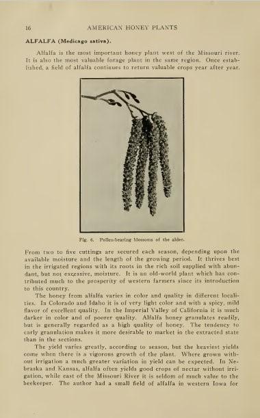 Alfalfa pellett